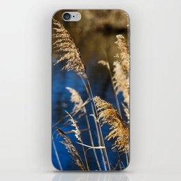 Reeds in Camargue iPhone Skin