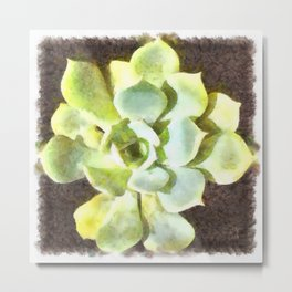 Succulent Garden Plant With Dew Metal Print