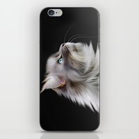 maine iPhone & iPod Skins featuring Maine Coon by Julie Hoddinott
