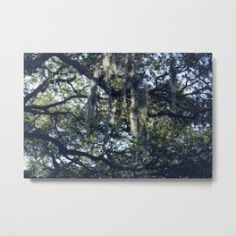 sunlight and moss in the trees Metal Print