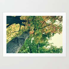 Autumn Overhead Art Print