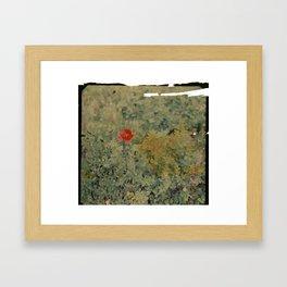 Poppy flower Framed Art Print