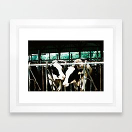 Moo Framed Art Print