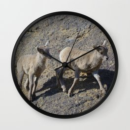Big horn sheep young in Jasper National Park Wall Clock