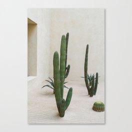 Cabo Cactus VI Canvas Print