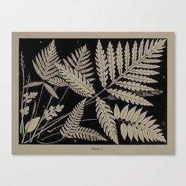 New England Ferns Canvas Print