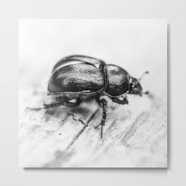 Black Beetle Metal Print