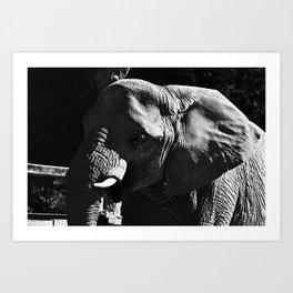 Elefante Art Print