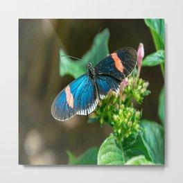 Small Black Postman Butterfly Metal Print