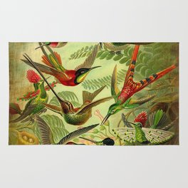 HUMMINGBIRD COLLAGE- Ernst Haeckel Rug