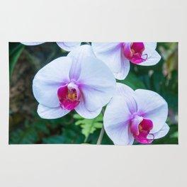 Thai Orchids Rug