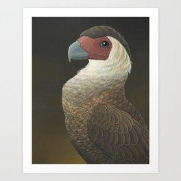 Guadalupe Caracara (Caracara lutosa) Art Print