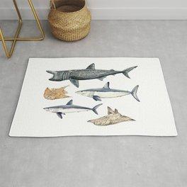 Shark diversity Rug