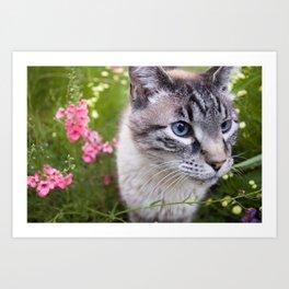 kitty in secret garden Art Print