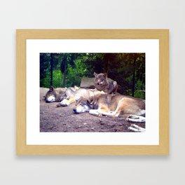 wolves Framed Art Print