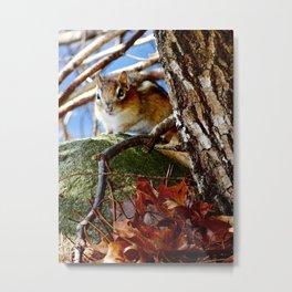 Chipmunk in the leaves Metal Print