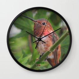 Hummingbird in the Japanese Maple Wall Clock