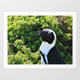 Cute African Penguin Portrait Boulders Beach, Cape Town Art Print