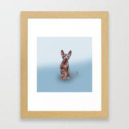 Drawing Sphynx kitten 5 Framed Art Print