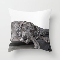 great dane Throw Pillows featuring Great Dane waiting by Deborah Janke