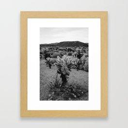 Cholla Cactus Garden V Framed Art Print