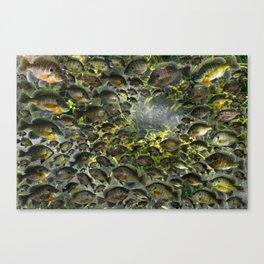 Bluegill Hole Canvas Print