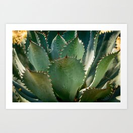 Mescal Agave Photo Print Art Print