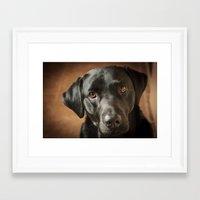 labrador Framed Art Prints featuring Black Labrador   by Simon's Photography
