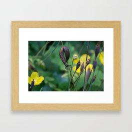 slug dancing on a poppy Framed Art Print