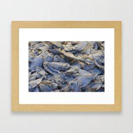 Dried Fish Framed Art Print