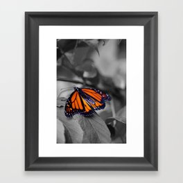 Monarch BW Framed Art Print