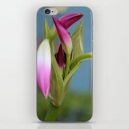 Pink Lily Bud iPhone Skin