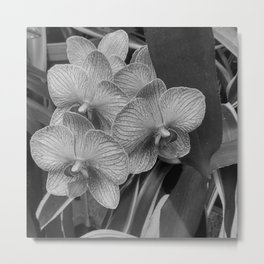 Orchids in Black & White Metal Print