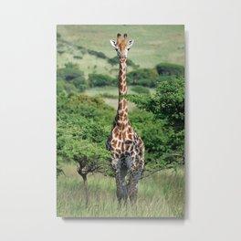Giraffe Standing tall Metal Print