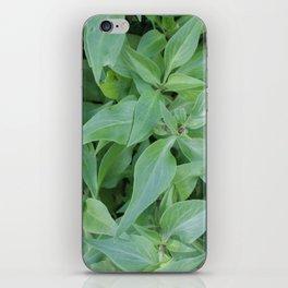 Cornwall Gardens Green Leaves Photo 1774 iPhone Skin