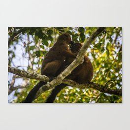Kisses in the Wild Canvas Print