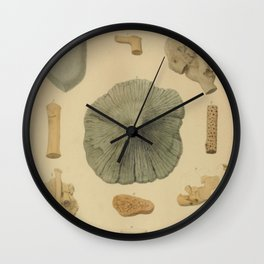 Coral Fossils Wall Clock