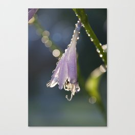 light and fresh Canvas Print