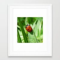 ladybug Framed Art Prints featuring Ladybug by MehrFarbeimLeben