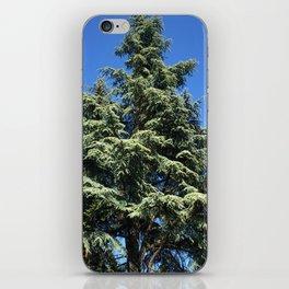 Kubota Garden tree from ground perspective iPhone Skin