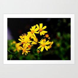 Bright Yellow Wildflowers Art Print