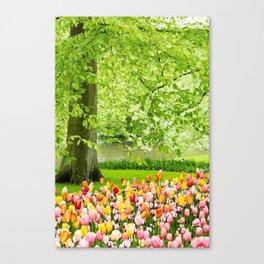 Tulip Garden in Amsterdam Canvas Print