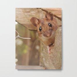 Mouse peeking Metal Print