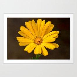 Another yellow marigold Art Print