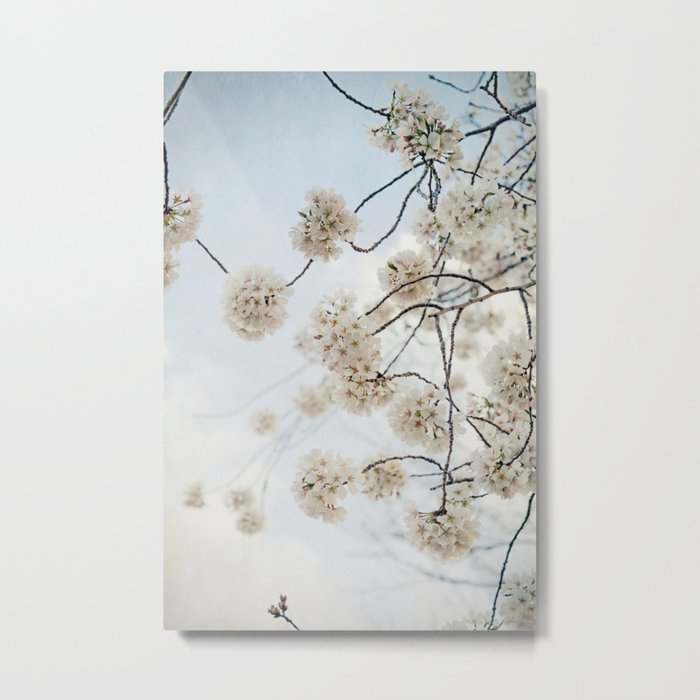 Sakura -- Spring Botanical, Cherry Blossoms Metal Print