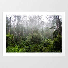 Forest and Fog Art Print