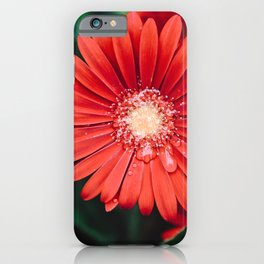 Red Daisy 2 #gerberas iPhone Case