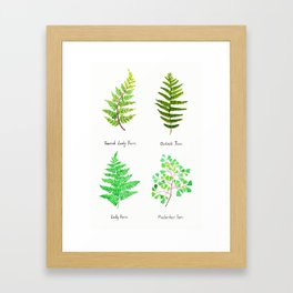 fern collection watercolor Framed Art Print
