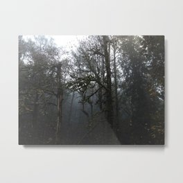FOREST FOG Metal Print