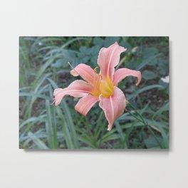 Blooming Tigerlily Metal Print